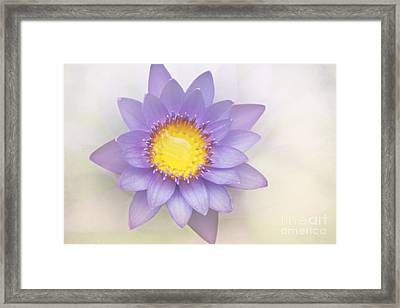 Purity And Grace Framed Print by Sharon Mau