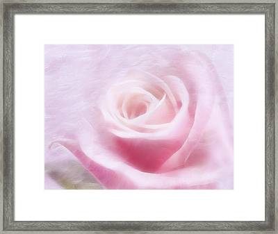 Purity And The Pink Rose Framed Print by Georgiana Romanovna