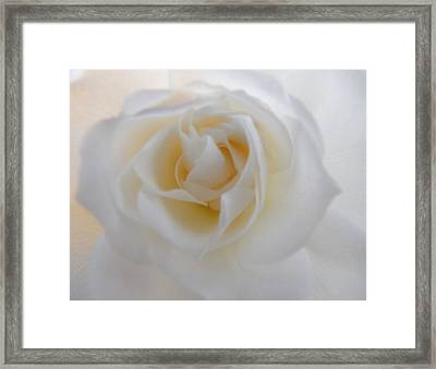 Framed Print featuring the photograph Purity by Deb Halloran