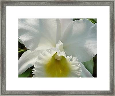 Purity Framed Print by Gregory Young