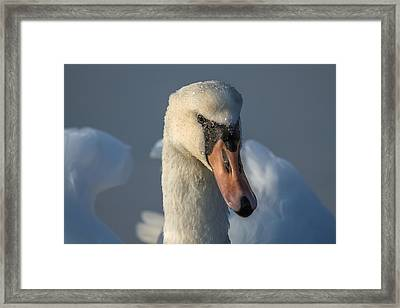 Purity In The Eyes Framed Print by Rose-Maries Pictures
