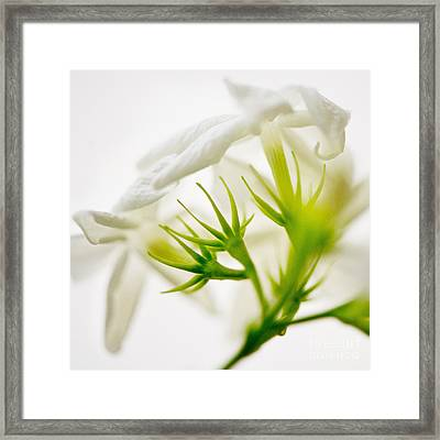 Purity Framed Print by Ivy Ho