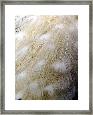 Purity Framed Print