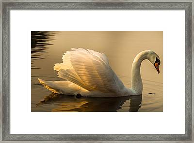 Purity Of The Soul Framed Print by Rose-Maries Pictures