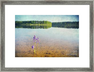 Purity Framed Print by Svetlana Sewell