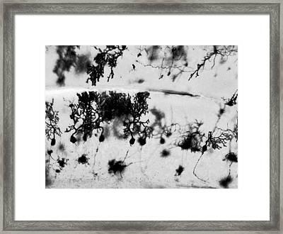 Purkinje Black And White Framed Print by Tyler Sloan
