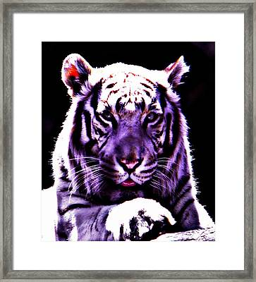 Purle Tiger Framed Print