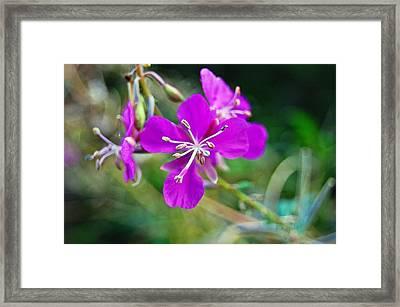 Purple 2 Framed Print by Jennifer Haggerty