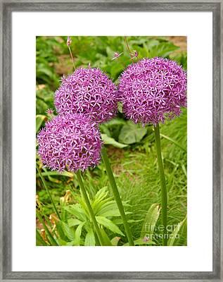 Purple Allium In Manhattan Framed Print by Anna Lisa Yoder