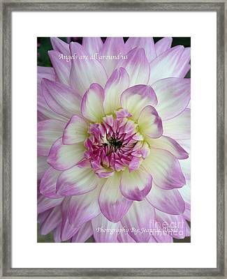 Framed Print featuring the photograph Purple And Cream Dahlia by Jeannie Rhode