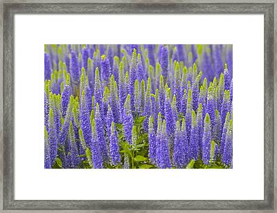 Purple And Green Framed Print by Marjorie Tietjen