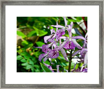Purple And Green Pla 501 Framed Print