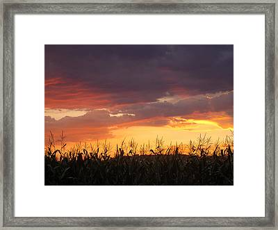 Purple And Maize Framed Print by Sarah Boyd