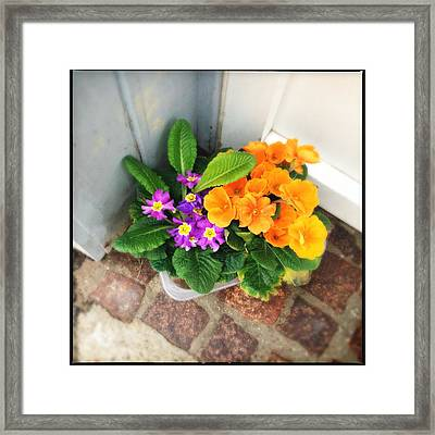 Purple And Orange Flowers Framed Print