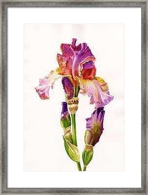 Purple And Orange Iris Framed Print