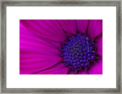 Purple And Pink Framed Print