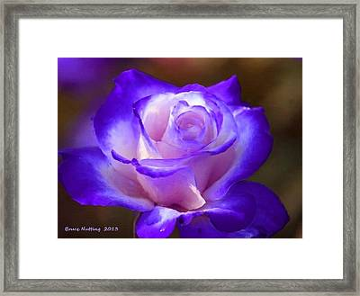 Purple And Pink Rose Framed Print by Bruce Nutting