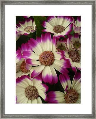Purple And White Flowers Framed Print by Fabian Cardon