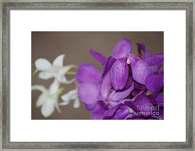 Framed Print featuring the photograph Purple And White by George Mount