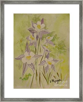 Purple And White Columbines Framed Print