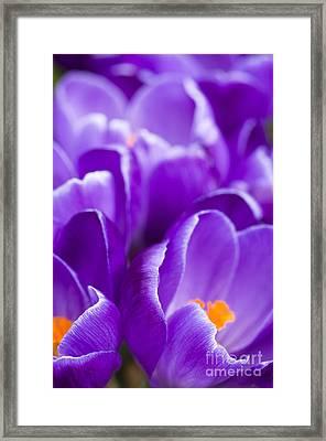 Purple Framed Print by Anne Gilbert
