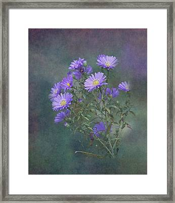 Purple Asters Framed Print by Angie Vogel