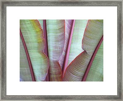 Framed Print featuring the photograph Purple Banana by Evelyn Tambour