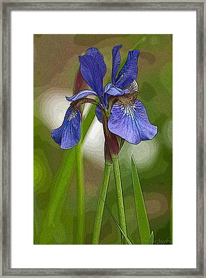 Purple Bearded Iris Watercolor With Pen Framed Print