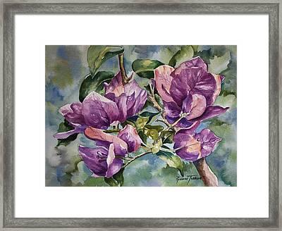 Purple Beauties - Bougainvillea Framed Print by Roxanne Tobaison