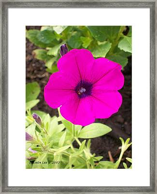 Framed Print featuring the photograph Purple Beauty by Belinda Lee