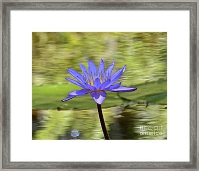 Purple Beauty Framed Print by Carol  Bradley