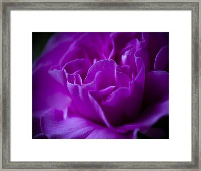 Purple Beauty Framed Print by Ron Roberts