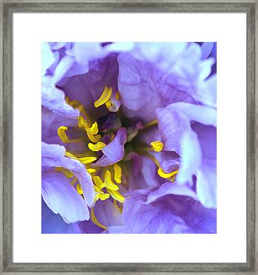 Purple Beauty Framed Print by Tine Nordbred