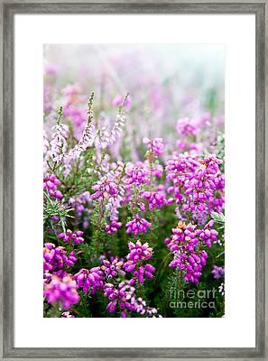 Purple Bell Erica Heather Plants Framed Print by Simon Bratt Photography LRPS
