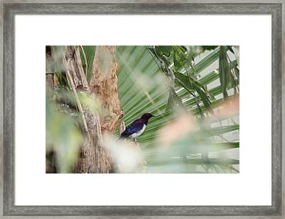 Purple Birs In Trees Framed Print