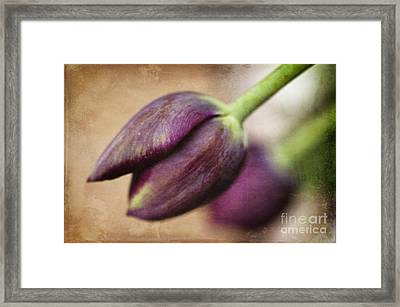 Purple Bliss Framed Print by Terry Rowe