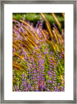 Purple Blooms Framed Print by Kathi Isserman