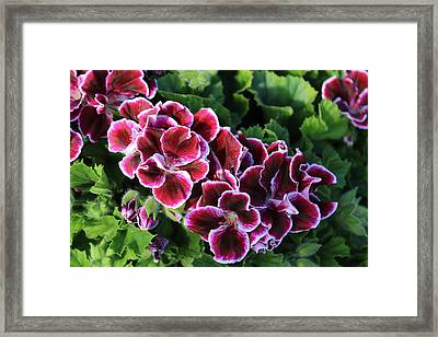Purple Blooms On A Field Of Green Framed Print