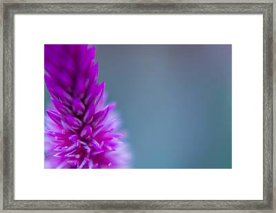 Framed Print featuring the photograph Purple Blur by Steven Santamour