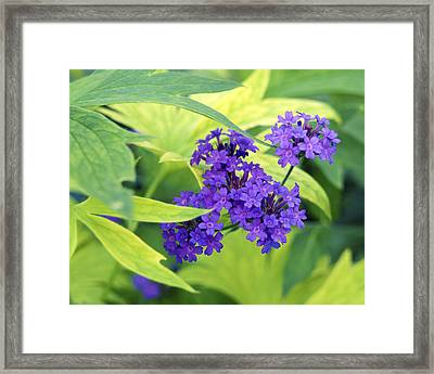 Framed Print featuring the photograph Purple Bunch  by Haleh Mahbod