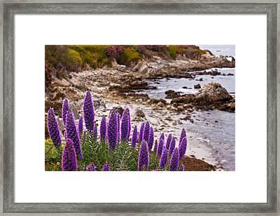 Purple California Coastline Framed Print by Melinda Ledsome