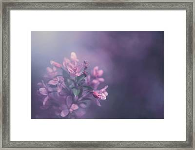 Purple Framed Print by Carrie Ann Grippo-Pike