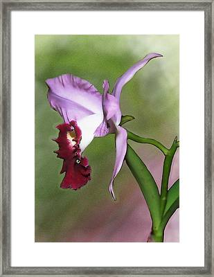 Purple Cattleya Orchid In Profile Framed Print