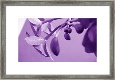 Purple Charm Framed Print