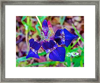 Purple Chinese Houses From Above In Park Sierra Near Coarsegold-california  Framed Print by Ruth Hager