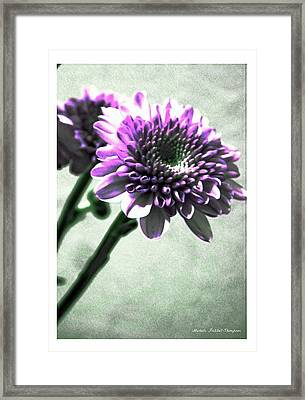 Purple Chrysanthemum Framed Print by Michelle Frizzell-Thompson