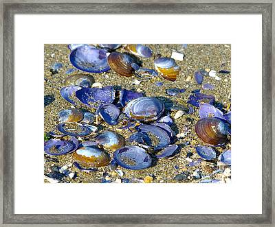 Purple Clam Shells On A Beach Framed Print