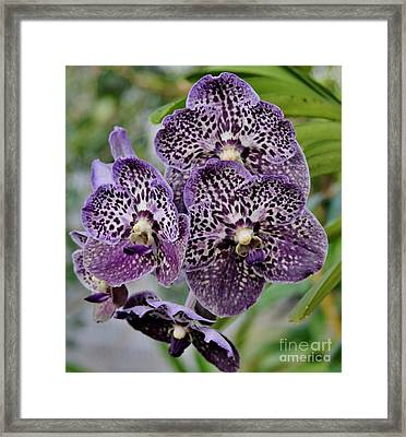 Purple Cluster Framed Print