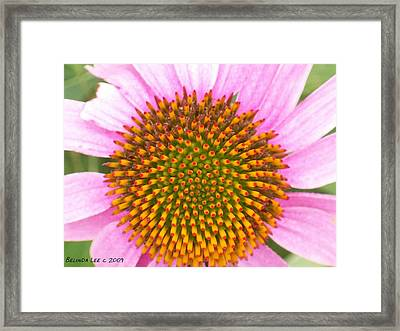 Framed Print featuring the photograph Purple Conehead Closeup by Belinda Lee