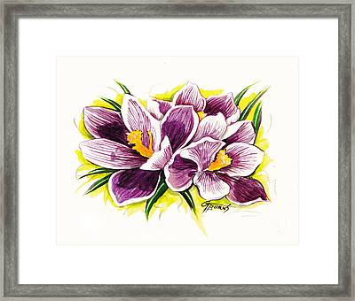 Purple Crocus Watercolor Framed Print by GG Burns